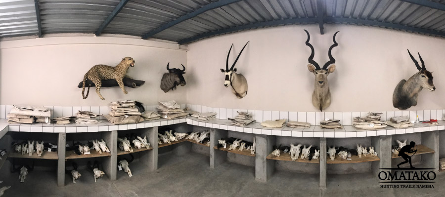 omatako-hunting-namibia-taxidermy-900px
